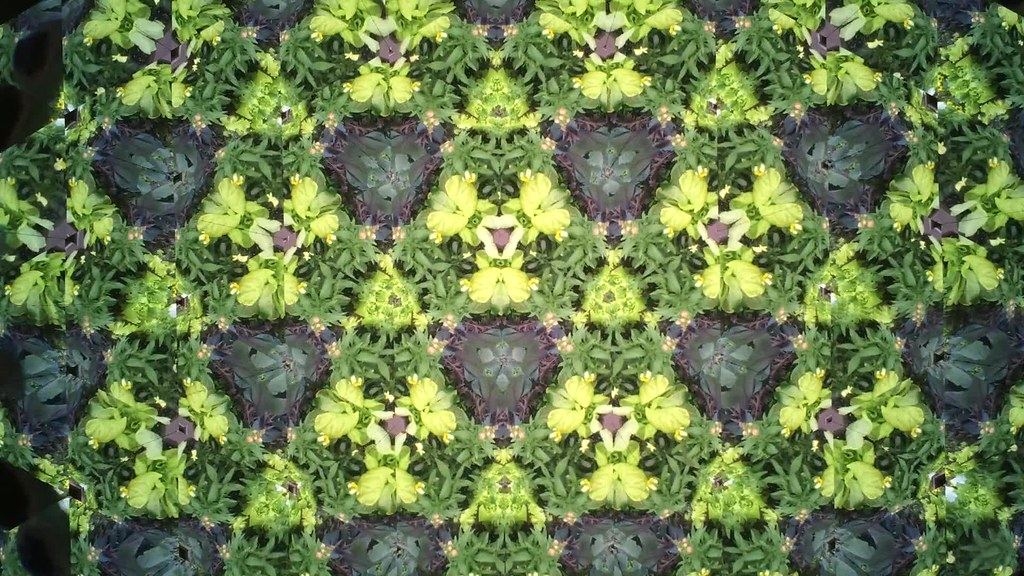 Garden Kaleidoscope