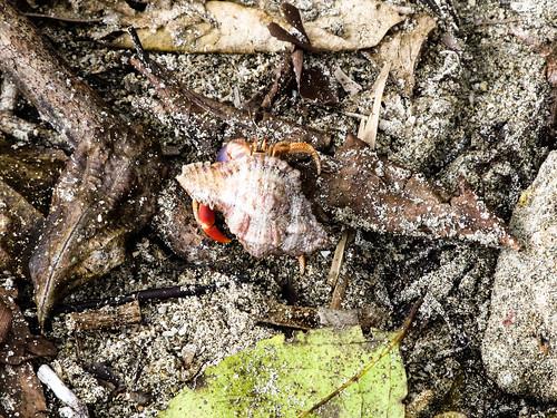 Parc National de Cahuita: une sorte de bernard l'hermite