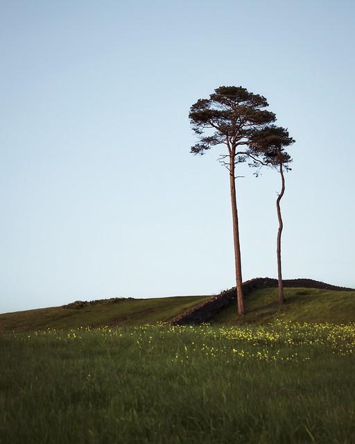 Lonely tree 🌲
