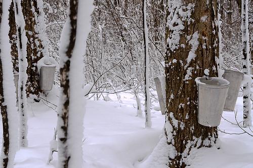 2012 nikon18200 sainteannedebellevue quéebc arboretummorgan nikond7000