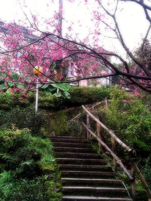 2012-02-18櫻花A