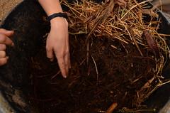 收穫人生第一桶廚餘沃土,短短幾週,廚餘就變沃土囉!