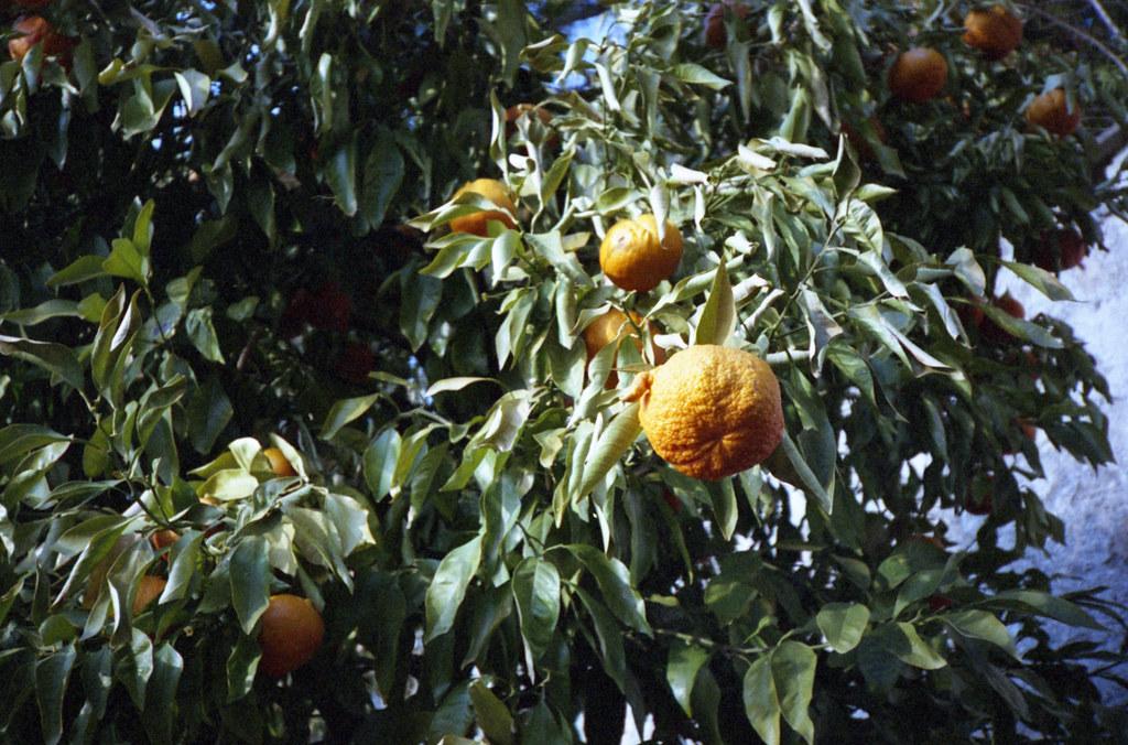 Owoce cytrusowe. Fuji DL-200.
