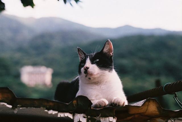 新手玩底片之貓貓寫真集