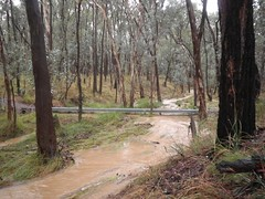 Long Gully in flood. B Pritchard