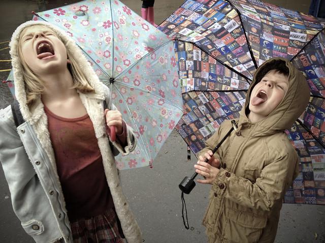 raindrop-catchers