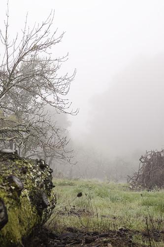 Log and Fog blog