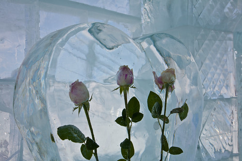 Roses in the ice