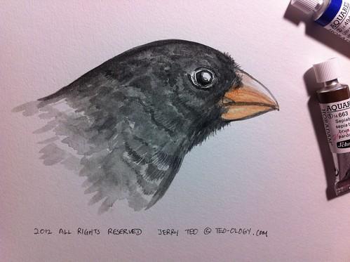 Darwin Day 2012