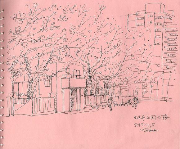 西大井広場公園の桜 The cherry blossoms in Nishioi park