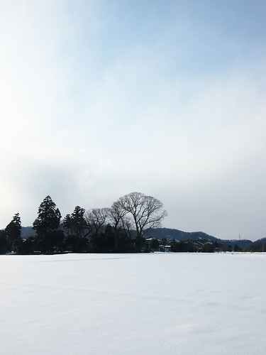 Trees in the snow field