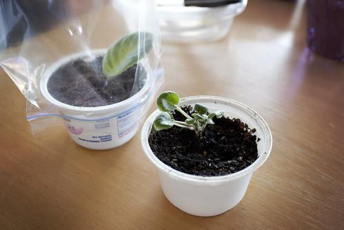 Baby plant!