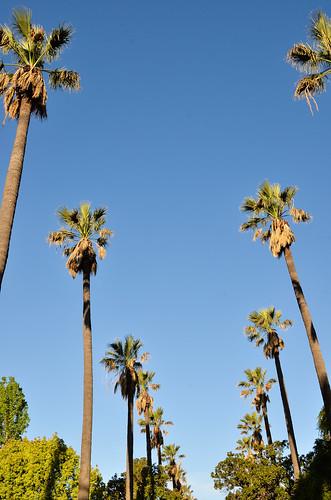 Pasadena 1 038.jpg