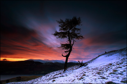 Larch Tree Dawn Loch Tay