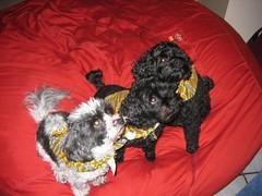 The Three Amigos - Stella, Cinder and Barley