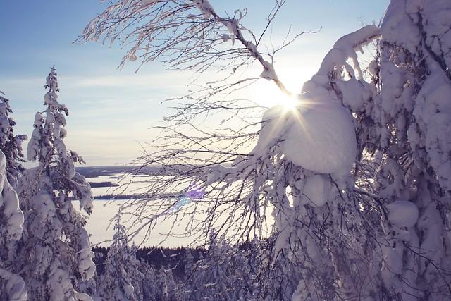 Talvi Keimiö 11