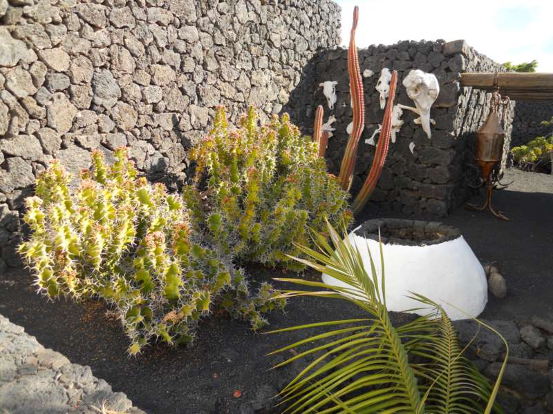 Rincon decorado con plantas