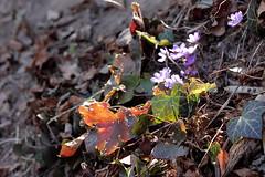 Autunno e primavera