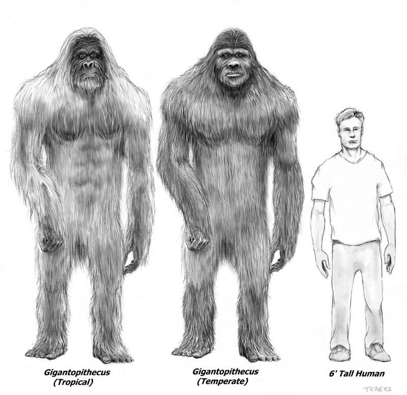 Bigfoot-Research