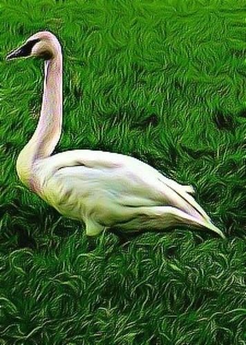 03-10-12 Funky Swan by roswellsgirl