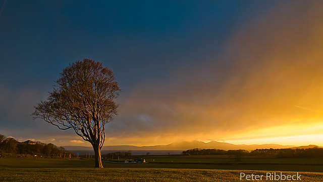West Kilbride Tree II