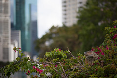 Can you find the Iguana at Brickell Key? | 120314-8808-jikatu