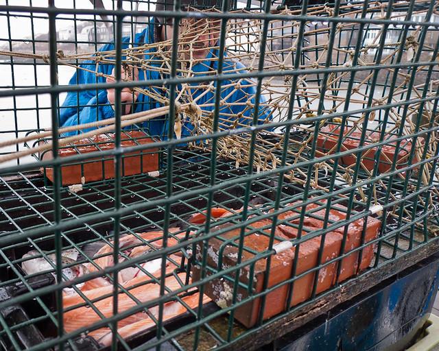La caccia e la pesca in Russia il 2017