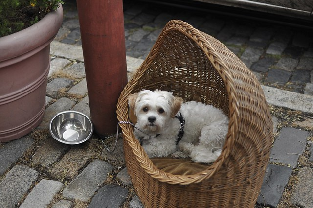 dog in a basket (359)