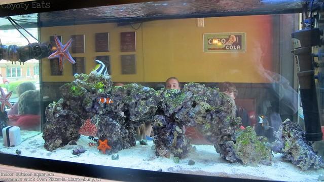 Giovanni's aquarium