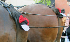 pack animal, horse tack, horse, horse harness,