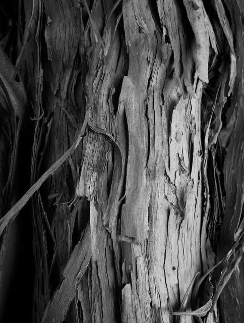 Peeled bark