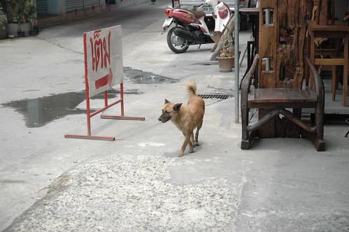 家具市場にいた犬