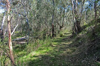 Track winding through bushland N Bartlett