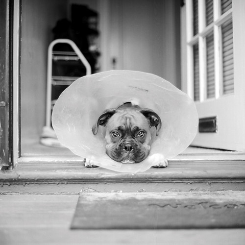 Cone of Shame by DowntownRickyBrown