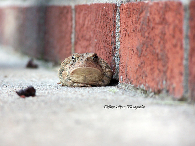 Toad is being lazy