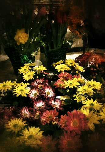 Image of Spring Flowers and processed using Nik's Snapseed Phone App