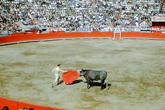 performing arts(0.0), animal sports(1.0), bull(1.0), sport venue(1.0), event(1.0), tradition(1.0), sports(1.0), bullring(1.0), entertainment(1.0), matador(1.0), bullfighting(1.0),