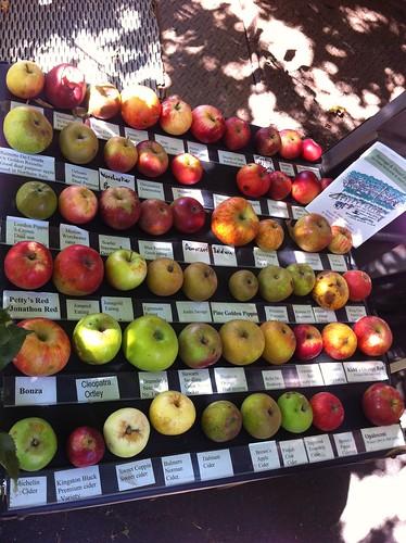 Apples apples apples!