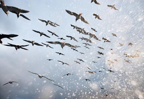 Corey_Arnold_Salt_Birds_1674_412