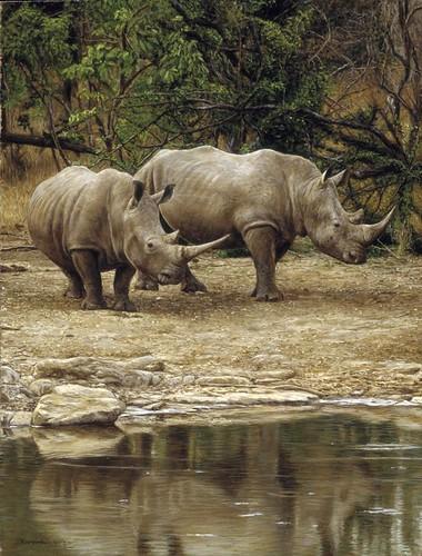 """'Rhinos by Water' oil on board 16"""" x 12"""