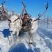 Reindeer sledding with Even nomads in Oymyakon, Yakutia, Siberia / Russia