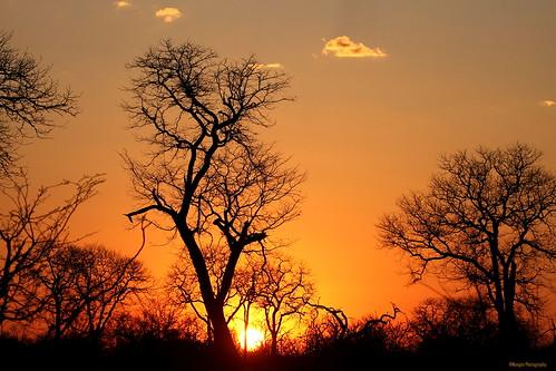 africa trees sunset landscape safari botswana moremi khwai bestcapturesaoi magicunicornverybest