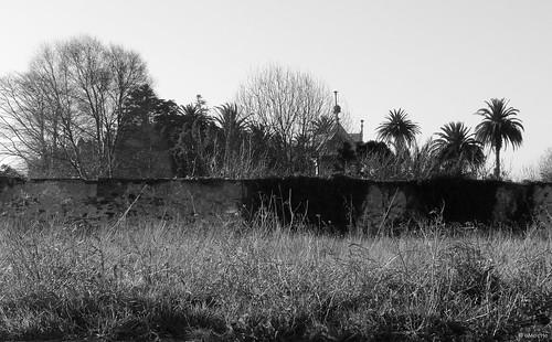malas hierbas - la ciudad en la que vivo by eMecHe