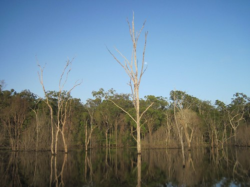 Dead trees around the old riverbeds