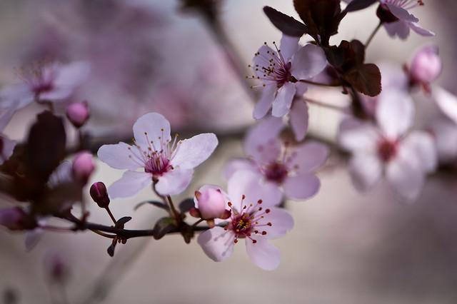013 flowers