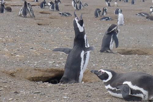 Punta Arenas-129