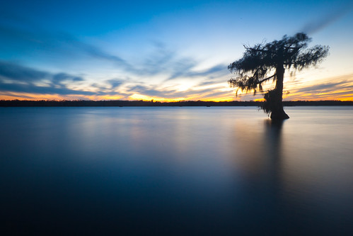 longexposure blue sun set night canon reflections scott photography photo louisiana dusk bayou photograph hour swamp cypress etsy naure conservancy acadiana lakemartin cypressisland silhouettetree mohrman