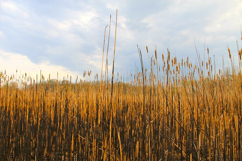 Lincoln Marsh, Early Spring 2012