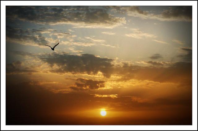 Volando hacia la libertad.