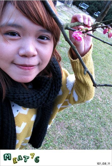 【遊記】陽明山國家公園|櫻花乍現在粉紅意境的花花世界17